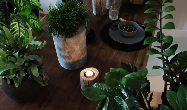 Urban Jungle Bloggers: Plant Gang