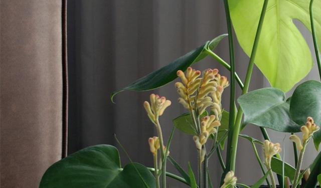 Nieuw: een kamerplant met pootjes!