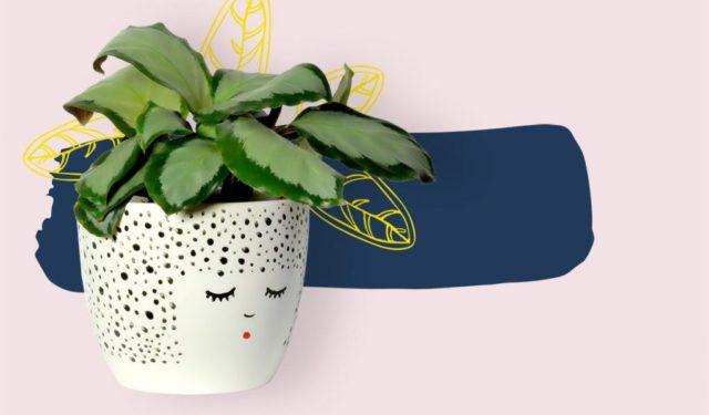 Onmisbaar in jouw urban jungle: plantenpotjes met karakter