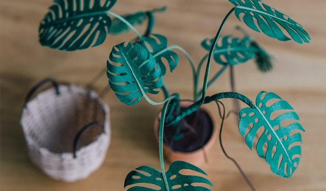…1-2-3-4, plantje van papier