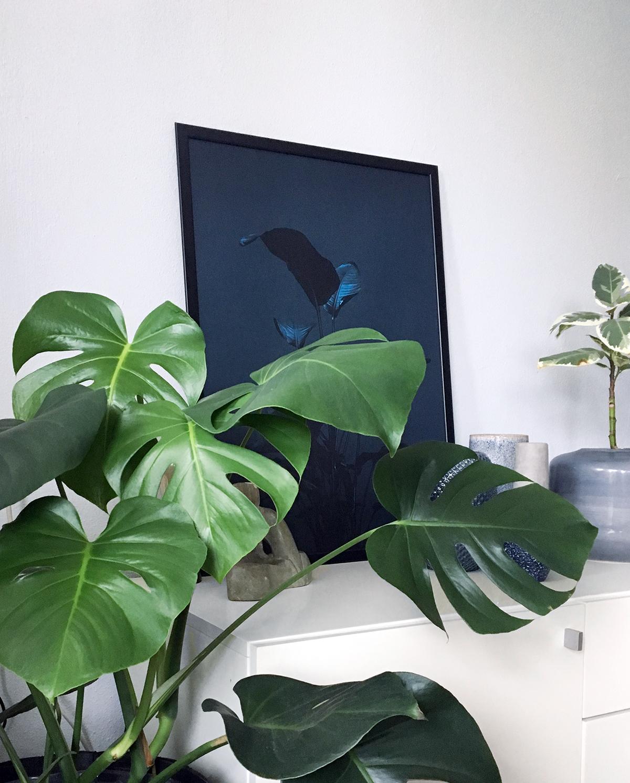 Monstera I & Ficus Elastica in de spotlight