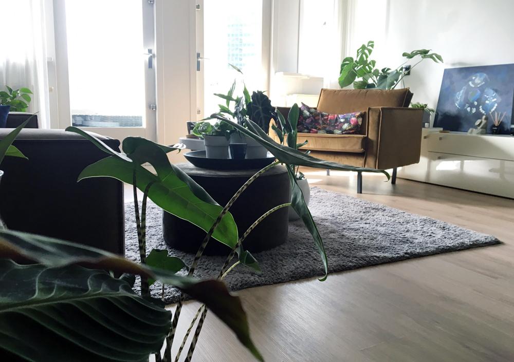 Tijd voor nieuwe planten!