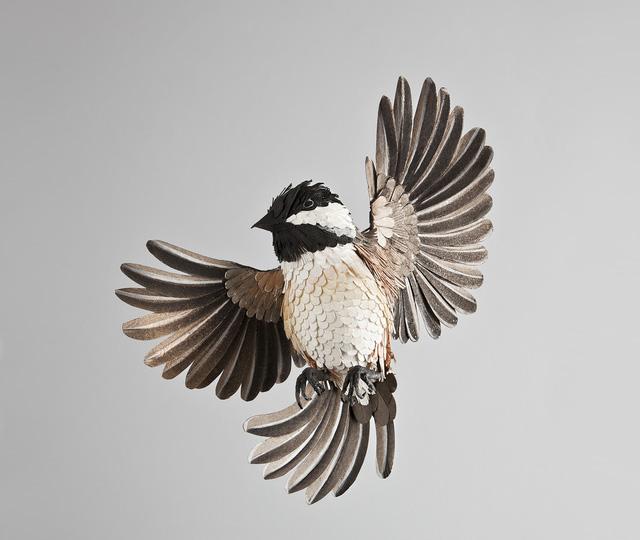 Diana-Beltran-Herrera-Dutch-Sparrow